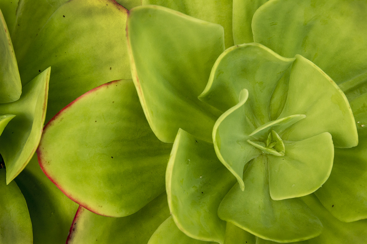Planta jardin